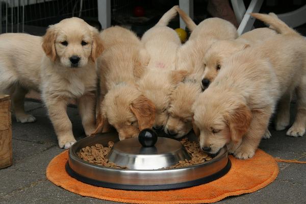 Cani cibo Regno Unito