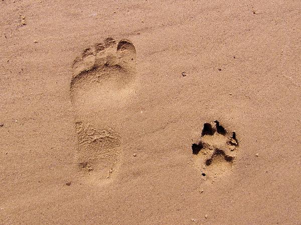 Cattolica impronte animali mare