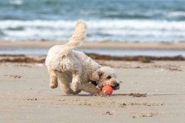 Danimarca cane spiaggia