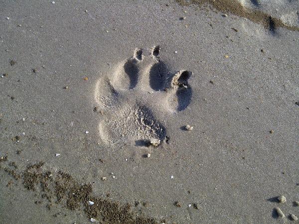 Misano Adriatico zampa spiaggia