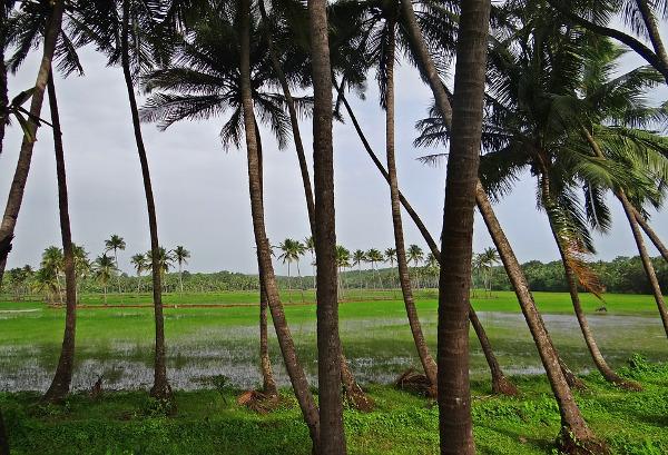 Palme vento Goa