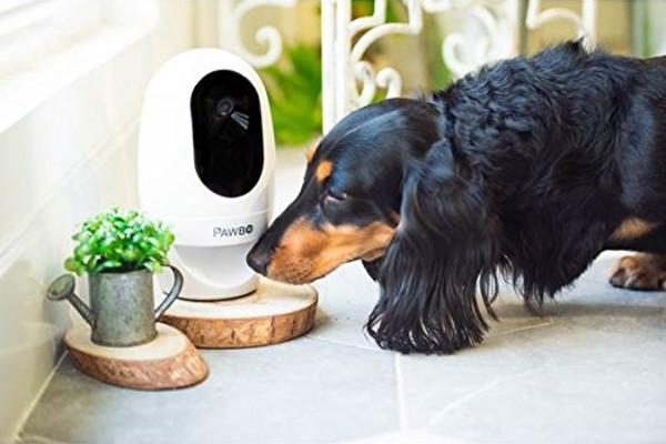 Pawbo videocamera per cani e gatti
