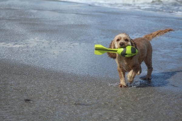Riccione cane spiaggia