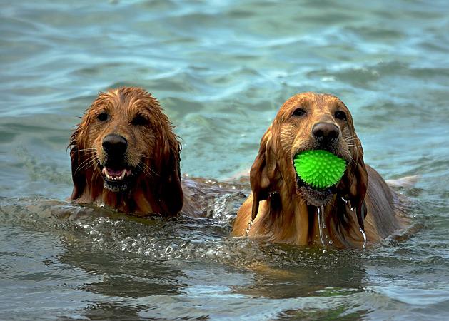 Vacanza cani