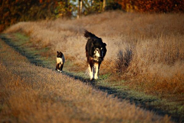 Cani gatti sintomi processionaria