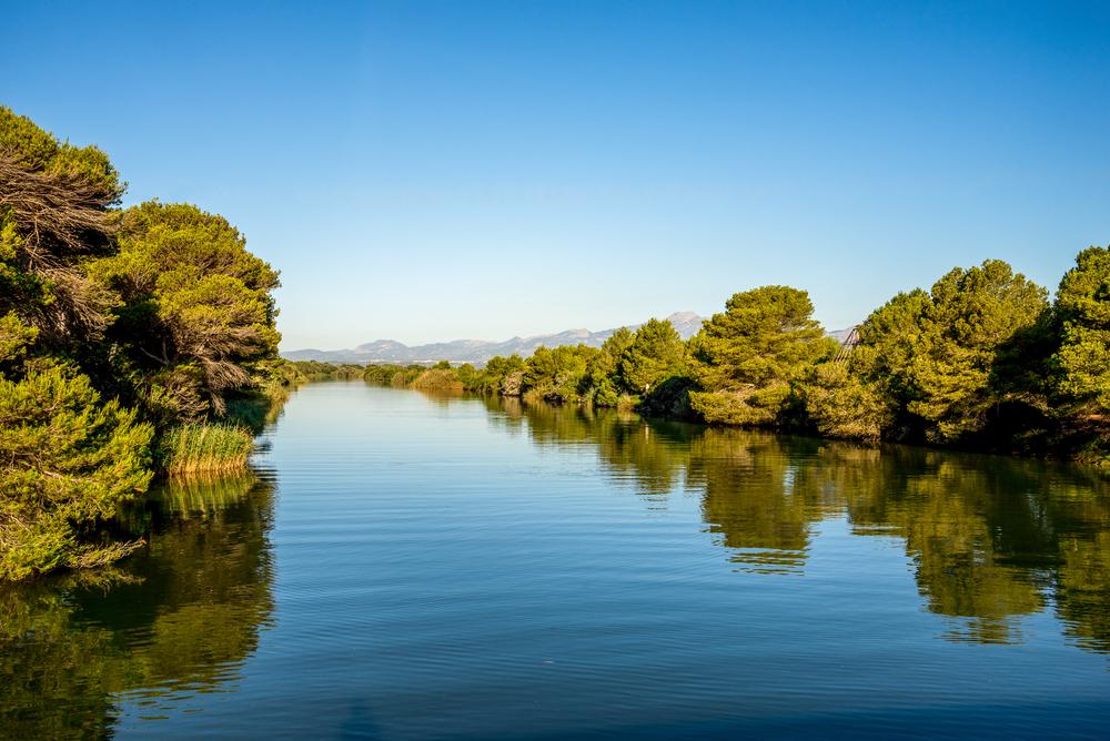 Palma di Maiorca parchi naturali Riserva di Albufera