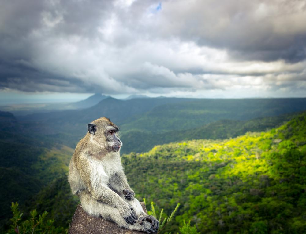 Parco Nazionale Black River Gorges Mauritius