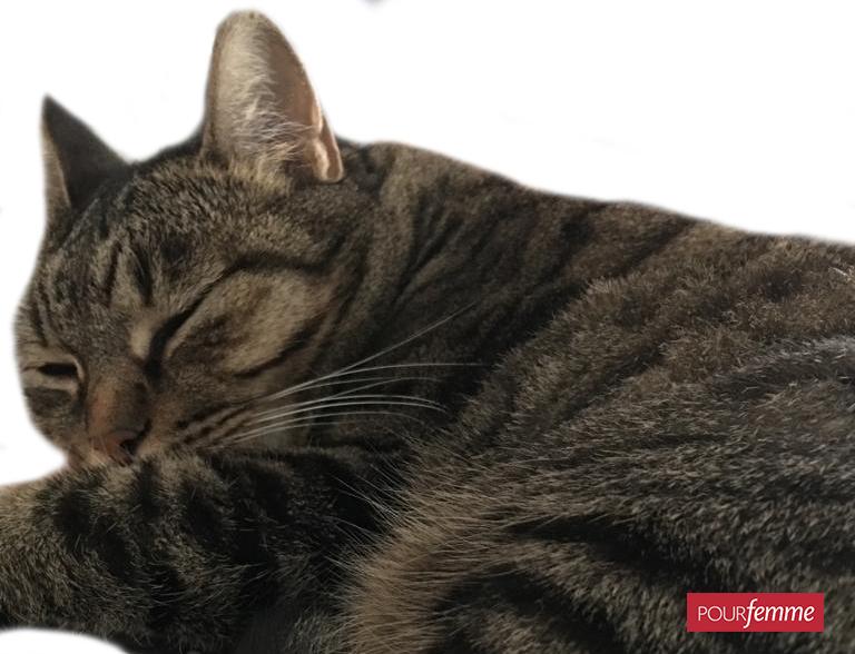 Un gatto in casa allunga la vita: i benefici per la salute dei cardiopatici