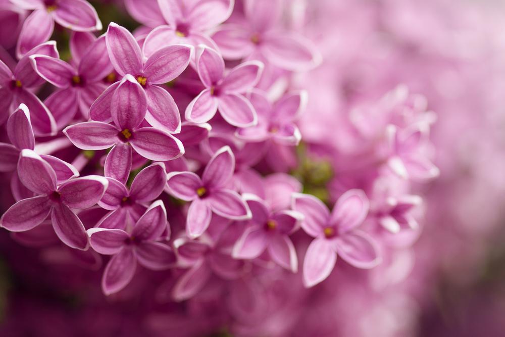 Piante primavera biancospino