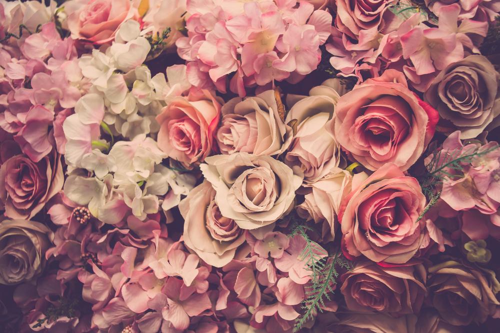 Piante primavera rosa