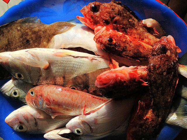 Capire se pesce è fresco