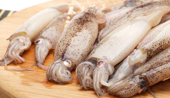 Conservare i calamari