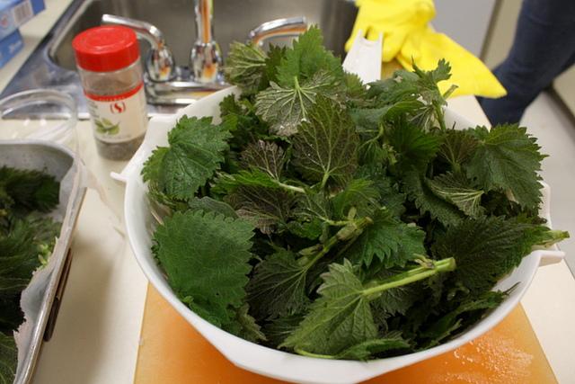 Come pulire e cucinare le ortiche pourfemme for Cucinare ortica