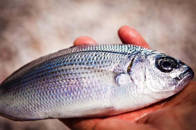 Squamare il pesce consigli