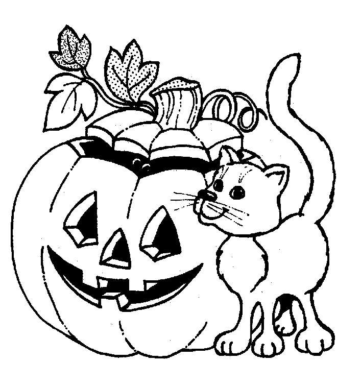 Gattino con zucca