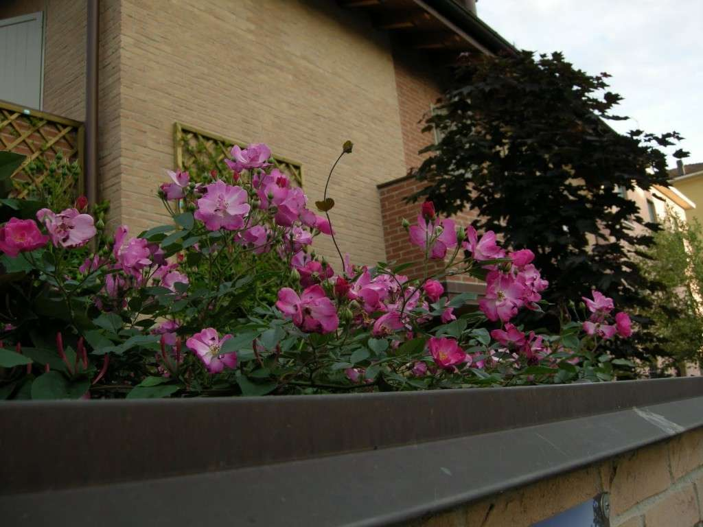 Balcone con i fiori