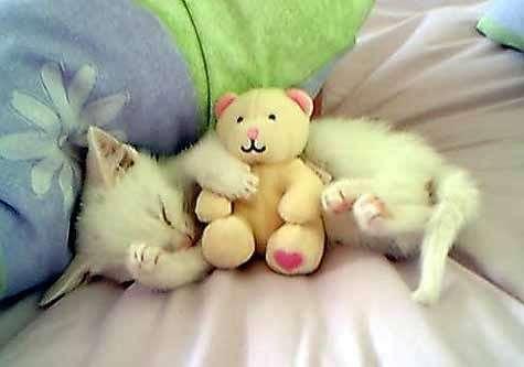 Buonanotte con gatto addormentato e peluche