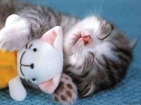 Buonanotte con gatto in primo piano