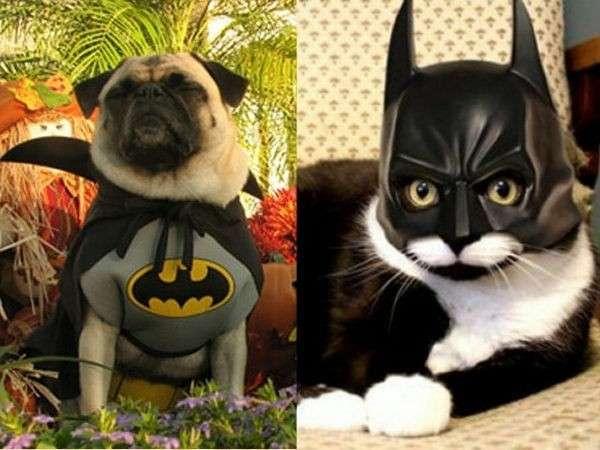 Batman a quattro zampe