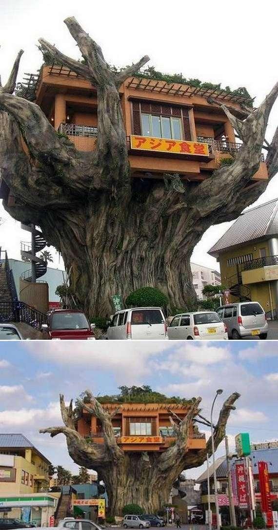 Casa nell'albero