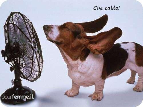 Il bassotto con il ventilatore