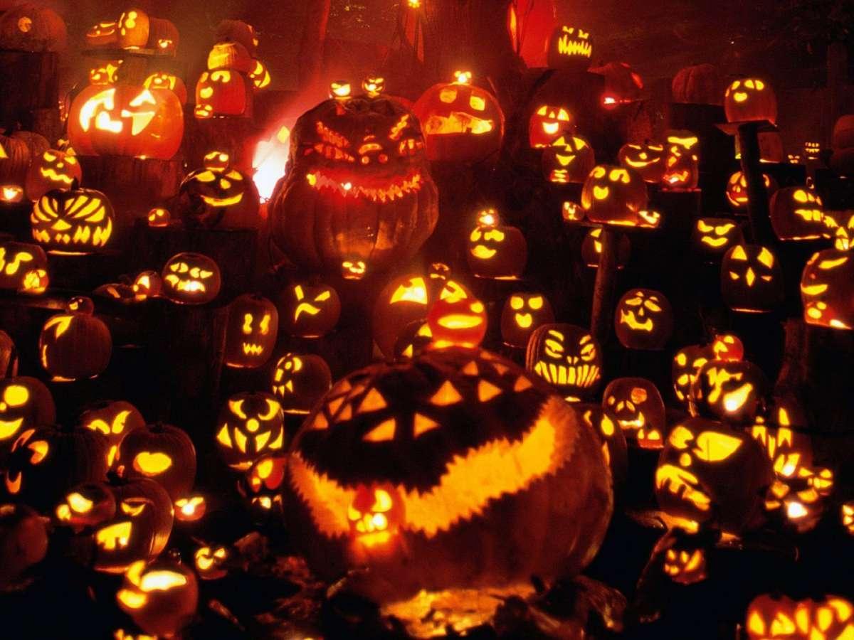 Distesa di zucche per Halloween