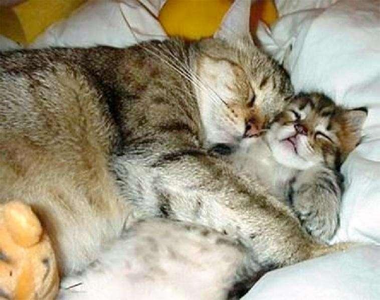 Amore tra gatti