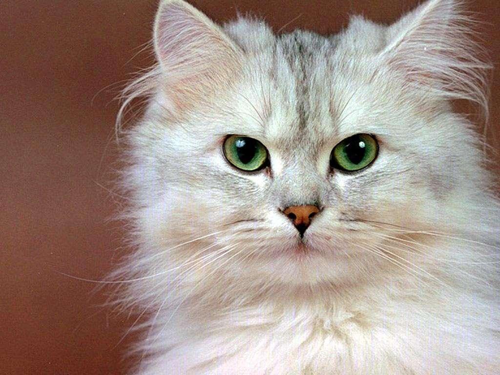 Sguardo da gatto