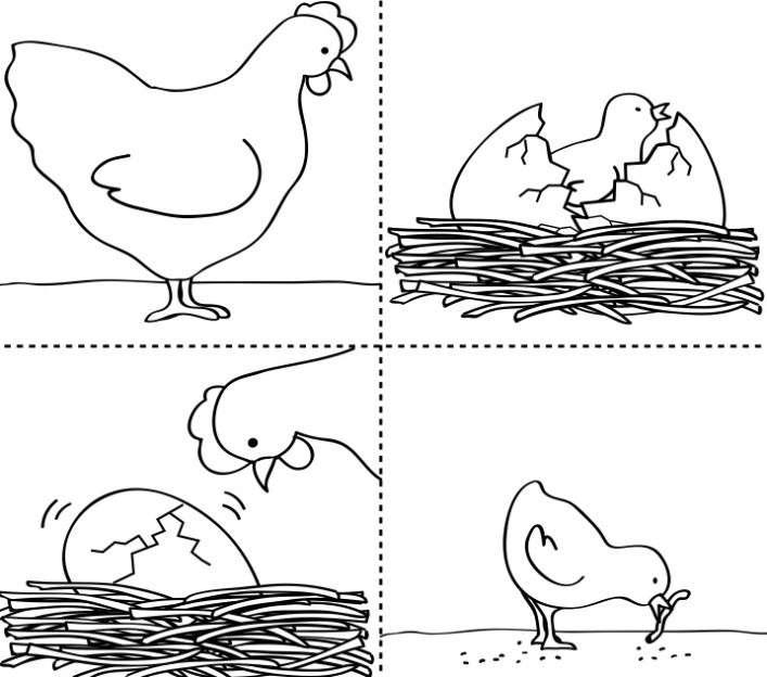 La sequenza dell'uovo