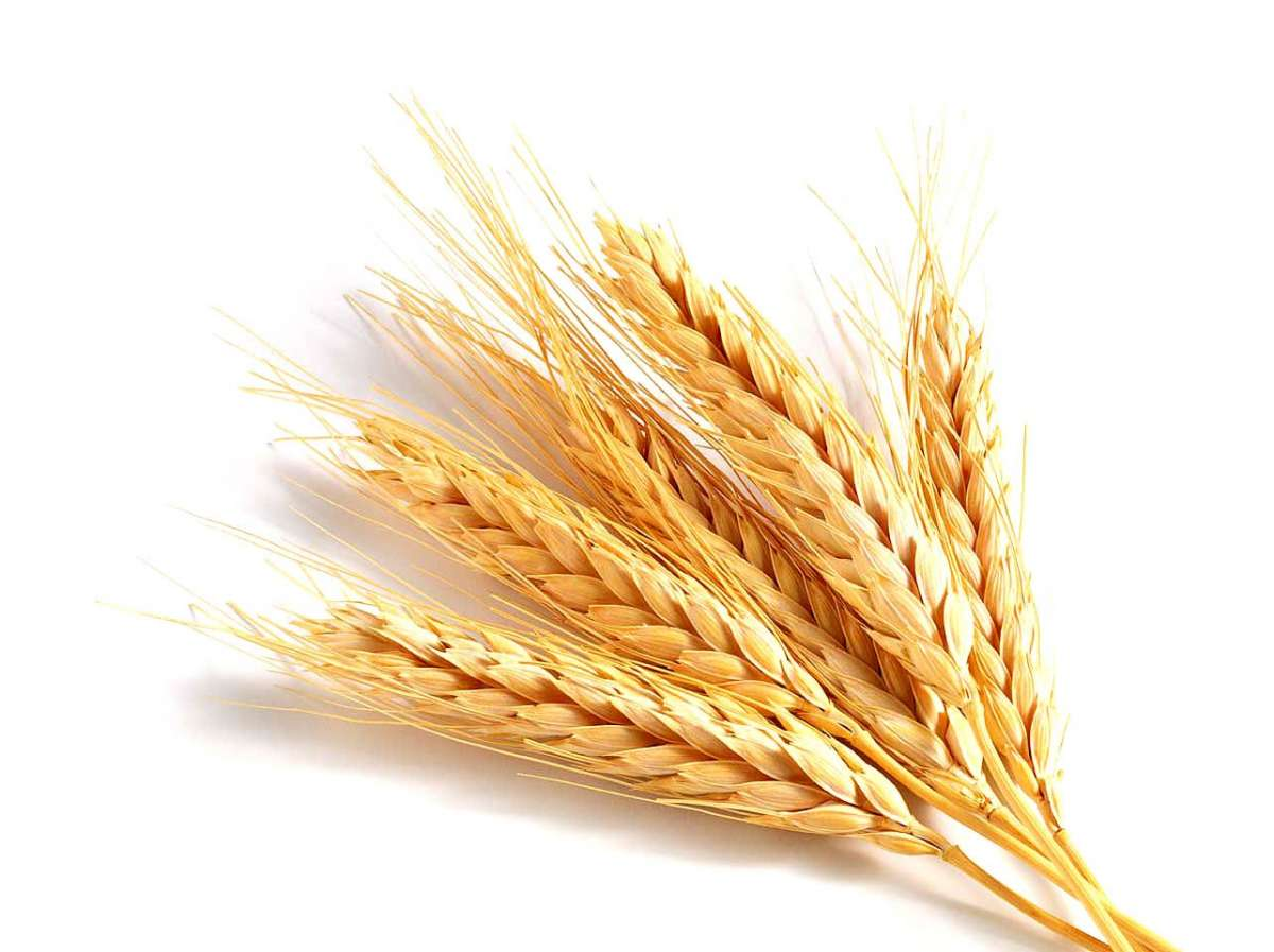 Alimenti ricchi di zinco, germe di grano