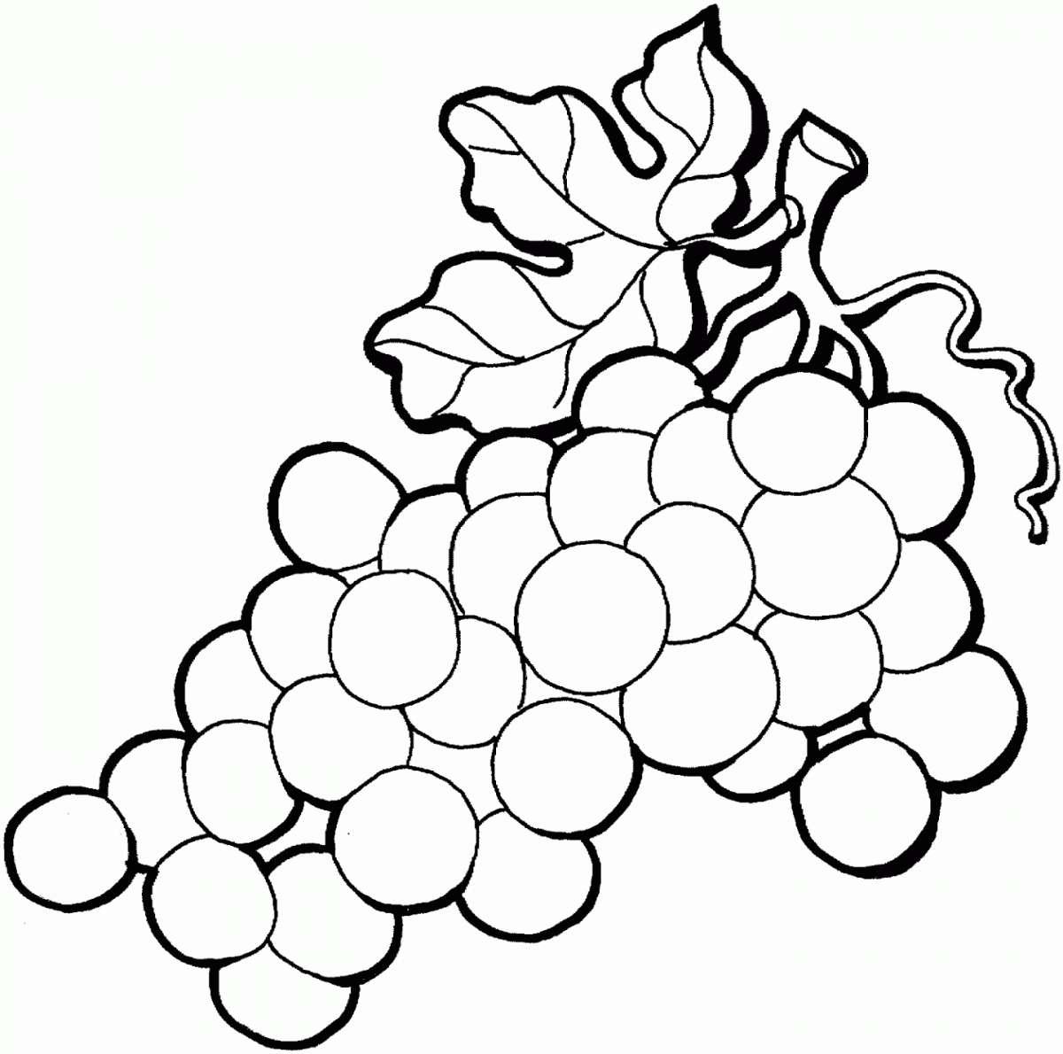 Disegno dell'uva