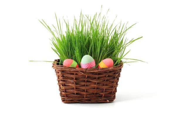 Cestino erba uova