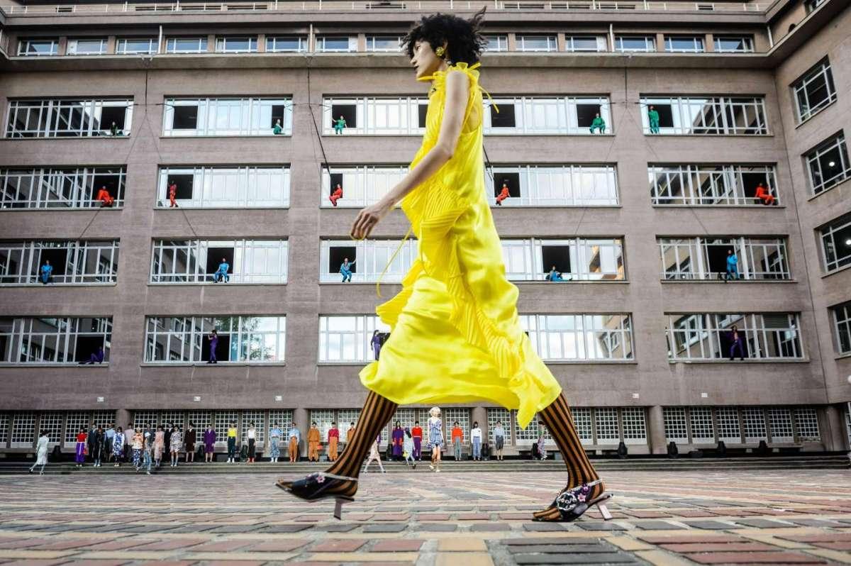 Il giallo Meadowlark da Kenzo