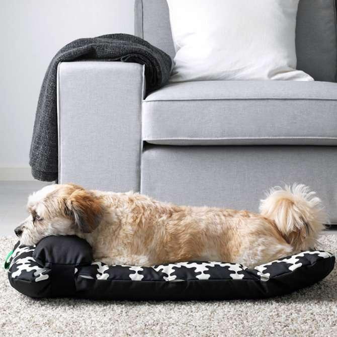 Cuscino IKEA per cane