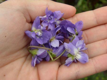 Risotto alle viole